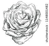 hand drawn rose flower. vector... | Shutterstock .eps vector #1148001482