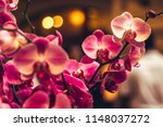 Orchid flower in winter or...