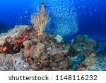 colorful tropical fish swimming ... | Shutterstock . vector #1148116232