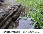 rained background nature yard | Shutterstock . vector #1148204612