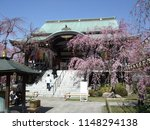 itabashi  tokyo   japan   april ...   Shutterstock . vector #1148294138