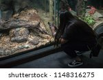 los angeles  california  usa ... | Shutterstock . vector #1148316275
