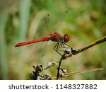 bugs and insects | Shutterstock . vector #1148327882