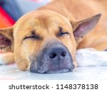 close up  dog breeders thailand ... | Shutterstock . vector #1148378138