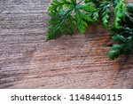 tropical green leave fern plant ... | Shutterstock . vector #1148440115