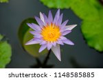 beautiful lotus in the pond | Shutterstock . vector #1148585885