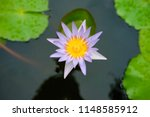 beautiful lotus in the pond | Shutterstock . vector #1148585912