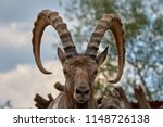 goat portrait  background | Shutterstock . vector #1148726138