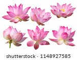 Pink Lotus Flower Isolated On...