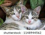 Stock photo mom cat hugging her newborn kitten 1148944562