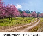 car route for tourists in pink... | Shutterstock . vector #1149117338