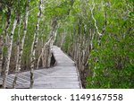 mangrove swamp in the city of... | Shutterstock . vector #1149167558