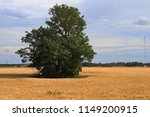 lonely tree on the field | Shutterstock . vector #1149200915
