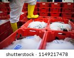 trays of fresh caught fish at... | Shutterstock . vector #1149217478