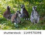 Magnificent Lemurian Looks