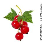 red currant isolated on white... | Shutterstock . vector #1149633638