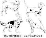 Stock vector vector drawings sketches pedigree dogs in the racks drawn in ink by hand objects with no 1149634085