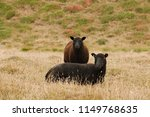 Black Sheep Mother And Daughter ...