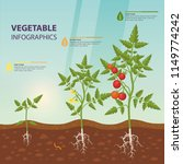 infographic for edible tomato... | Shutterstock .eps vector #1149774242