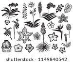 exotic and tropical flowers... | Shutterstock .eps vector #1149840542