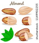 almond nut whole cut half with... | Shutterstock .eps vector #1149902255