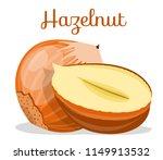 hazelnuts nut. hazelnut peeled...   Shutterstock .eps vector #1149913532