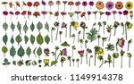 large set of drawings daisy ... | Shutterstock .eps vector #1149914378
