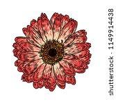 daisy floral botany sketch.... | Shutterstock .eps vector #1149914438