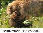 Small photo of Kodiak Brown Bear with Cub. Mama giving a bear hug.