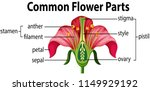 a common flower parts... | Shutterstock .eps vector #1149929192