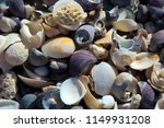dainty sea shells washed up on... | Shutterstock . vector #1149931208
