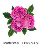 pink rose flowers in a floral... | Shutterstock . vector #1149973172