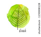vector leaf of birch tree at... | Shutterstock .eps vector #1150008128