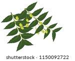 neem leaf is used for leprosy ... | Shutterstock .eps vector #1150092722
