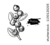 blueberry vector drawing.... | Shutterstock .eps vector #1150120205