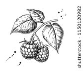 raspberry vector drawing.... | Shutterstock .eps vector #1150120982