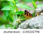 beautiful butterfly in the... | Shutterstock . vector #1150232798