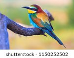 colored bird sits on a pattern... | Shutterstock . vector #1150252502