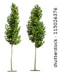 Green Trees Isolated On White....