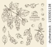 collection of schisandra branch ... | Shutterstock .eps vector #1150301138