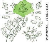 collection of jojoba  nuts ... | Shutterstock .eps vector #1150301165