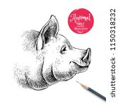 hand drawn sketch pig head... | Shutterstock .eps vector #1150318232
