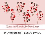 eucalyptus vector. decorative... | Shutterstock .eps vector #1150319402