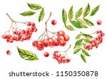 Rowan  Autumn Rowanberry ...
