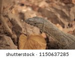 gunjur  the gambia  africa ... | Shutterstock . vector #1150637285