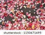 fallen red autumn leaves....   Shutterstock . vector #1150671695