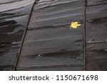 yellow autumn maple leaf on a...   Shutterstock . vector #1150671698