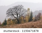 autumn in the mountains....   Shutterstock . vector #1150671878