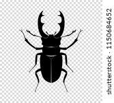Beetle Deer. Insect  Wildlife....