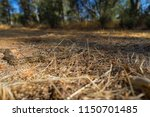common gopher snake ... | Shutterstock . vector #1150701485